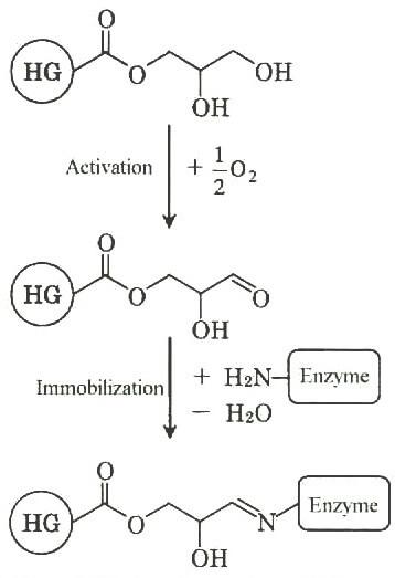 Механизм иммобилизации ферментов с помощью Sepabeads EC-HG